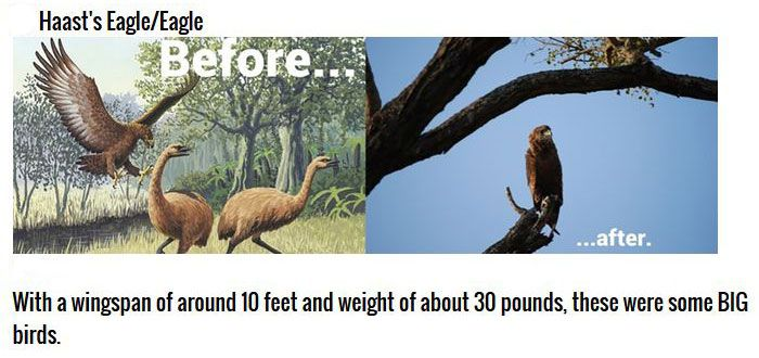 Cute Animals That Were Once Gigantic (6 pics)