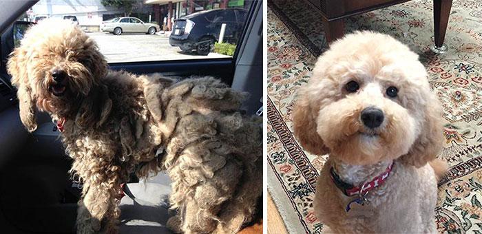Perritos antes y después de ser restaurados