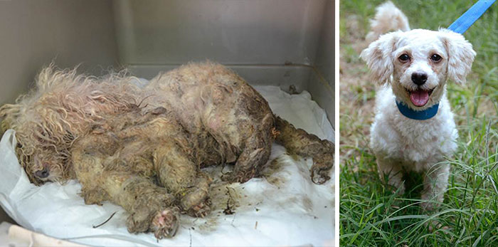 Rescue Dogs Before And After (16 pics)