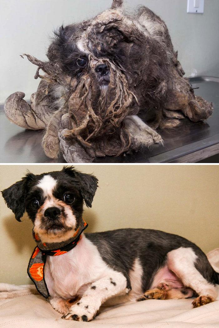 Perros salvados de la muerte, gran gesto de corazón