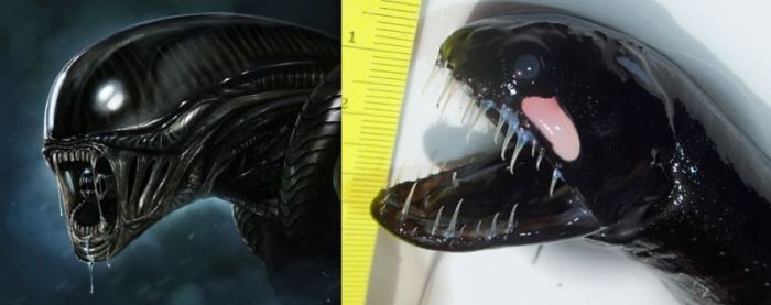 Alien from the Ocean (5 pics)