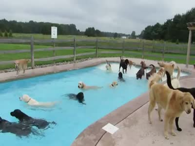 Dogs Are Having Fun At The Pool Party