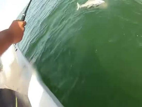 Shark Fishing Gone Wrong