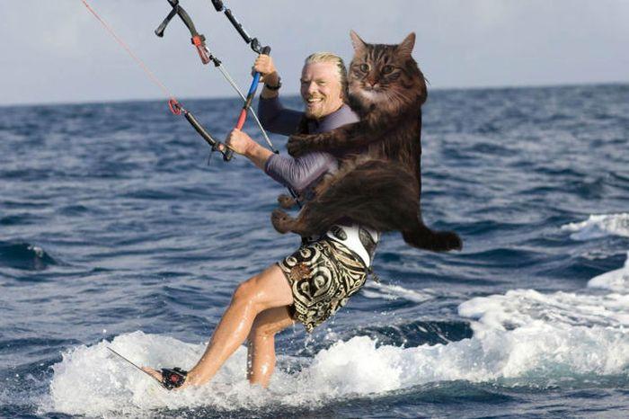 Denne New Wet Cat Meme dominerer internettet 40 billeder-9267