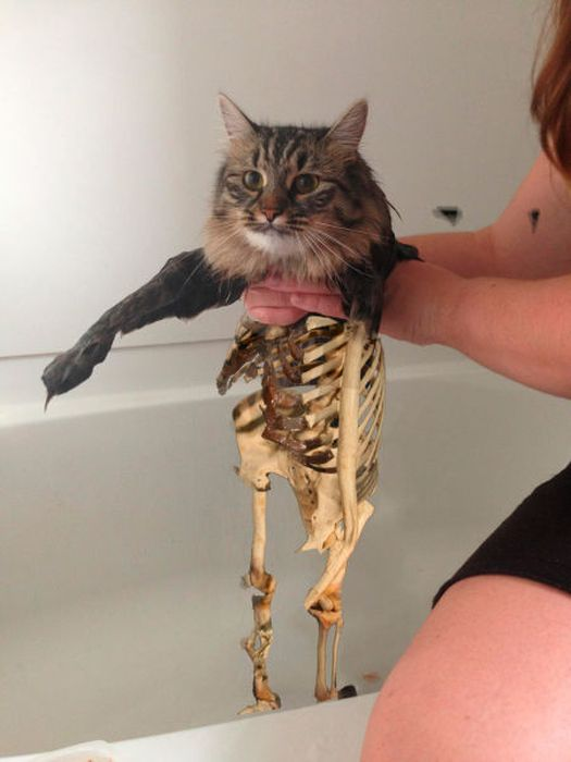 This New Wet Cat Meme Is Dominating The Internet (40 pics)