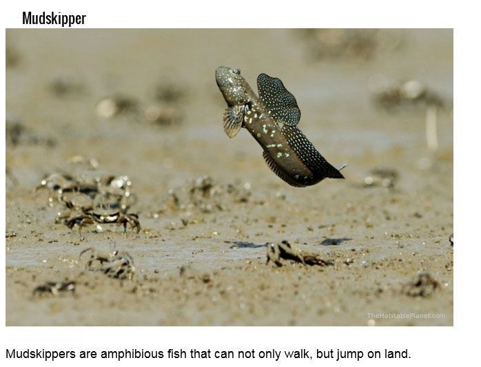 Aquatic Creatures And Their Hidden Talents (15 pics)
