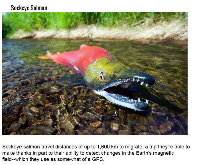 Aquatic Creatures And Their Hidden Talents (15 pics)