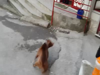 Pitbull, balon, köpek, patlatmak,