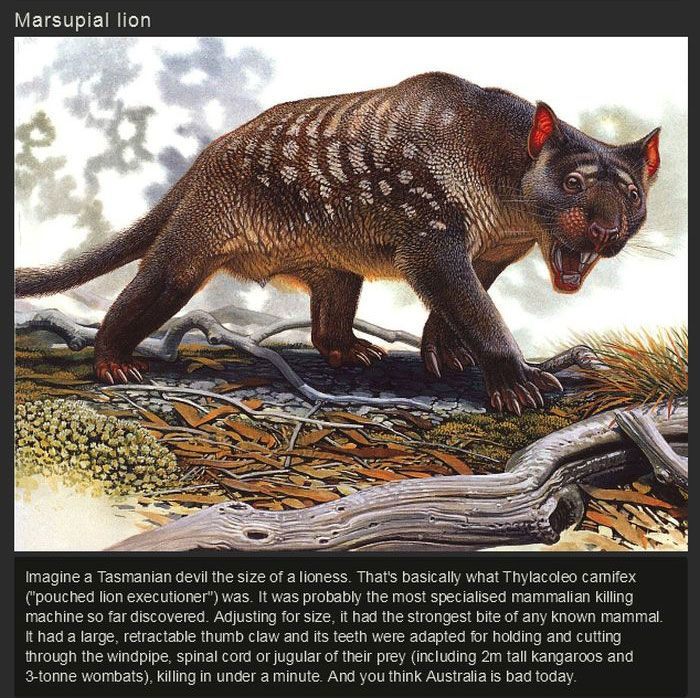 Ancient Animals That Once Ruled The Earth (15 pics)