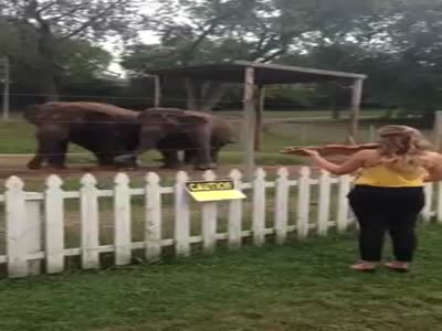 Elephants Dancing To The Violin Music