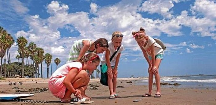 Californian Beaches are Overrun with Velella Velella (5 pics)