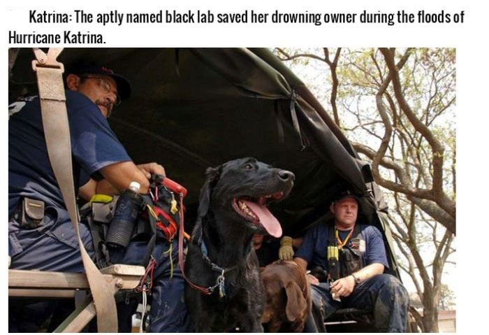 These Dogs Are More Than Pets, They're Heroes (16 pics)