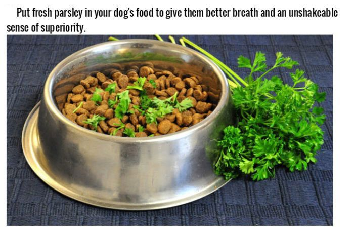 Life Hacks For Dog Owners (15 pics)