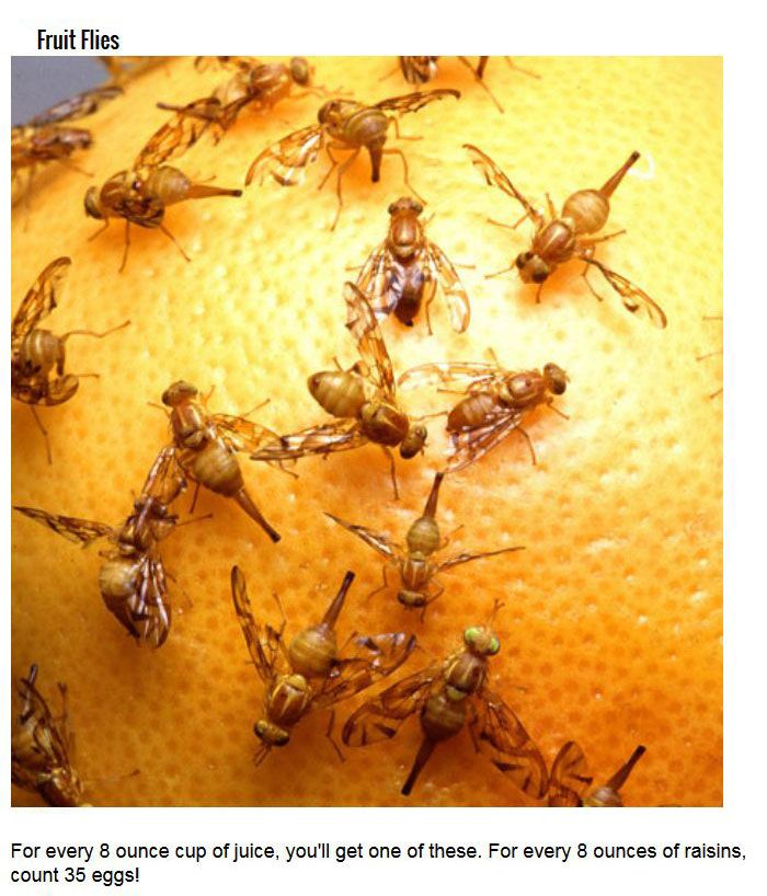 Disgusting Bugs You Didn't Know You've Been Eating (8 pics)