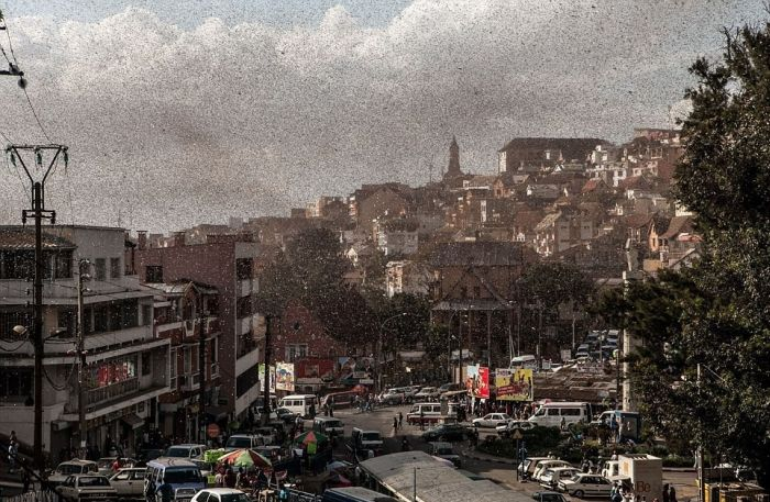 Locust Swarm Takes Over Madagascar (6 pics)