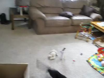 Laser Pointer Vs Cat