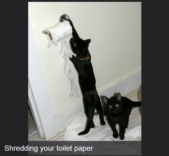 Annoying Things That Only Cats Can Get Away With (14 pics)