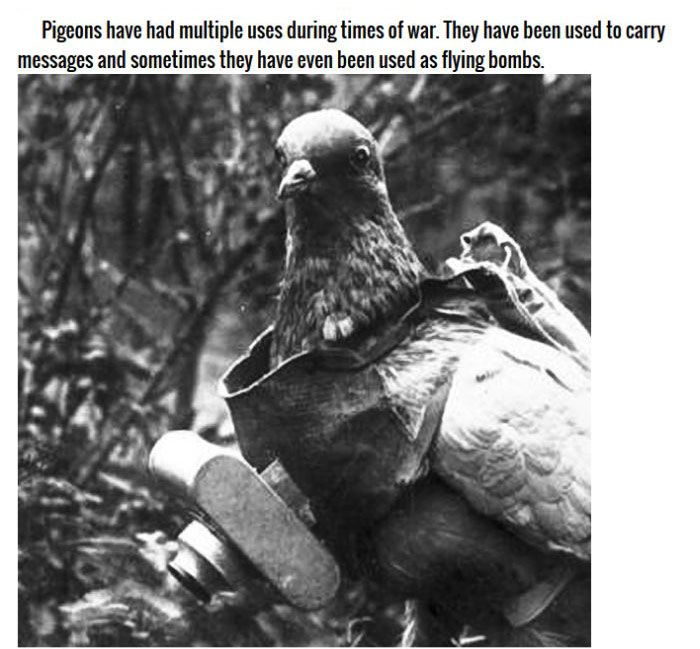 Animals You Didn't Know Were In The Military (11 pics)