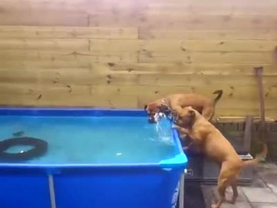 Bulldogs Working As A Team