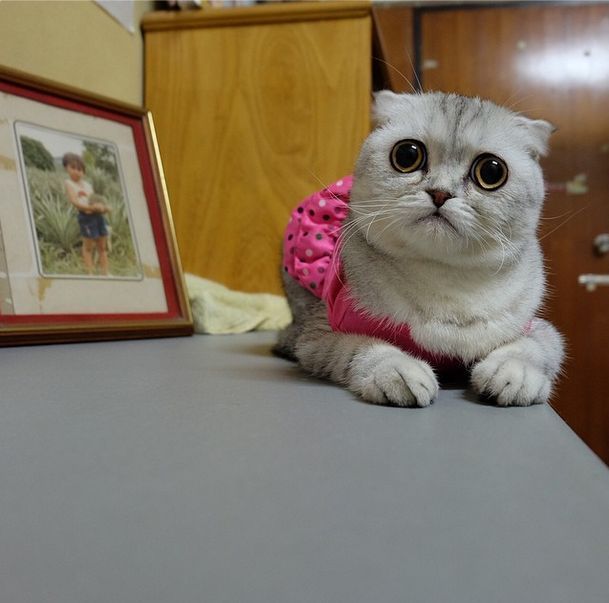 Little P Is The World's Saddest Cat (32 pics)