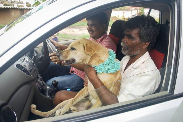 Indian Girl Marries a Dog (13 pics)