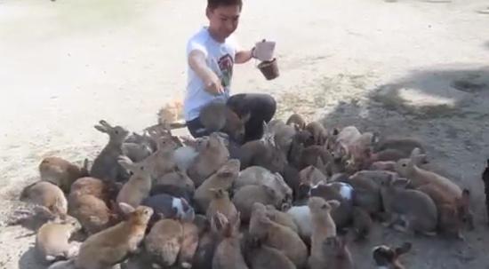 Japanese Island of Rabbits