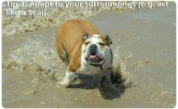 The 7 Most Important Parts Of A Beach Trip For A Dog (7 pics)