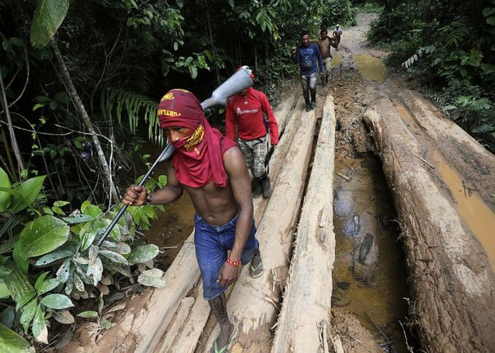 Citizens Of The Amazon Jungle Go To War With Loggers (20 pics)