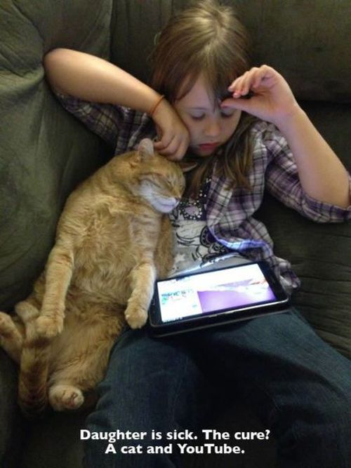 What It's Really Like To Be A Cat Owner (20 pics)