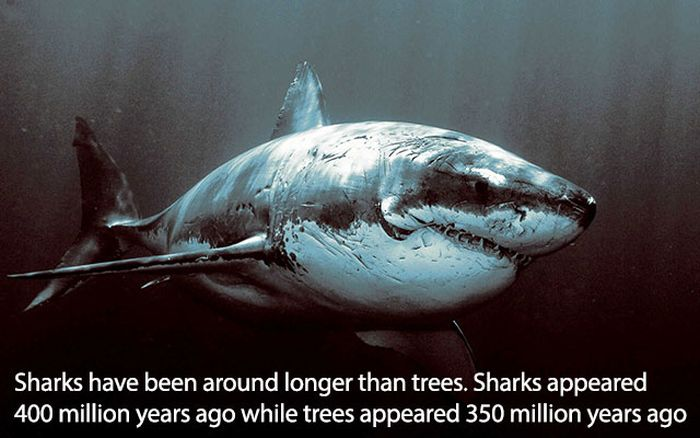 More Fun Facts To Make You Look Smart (15 pics)