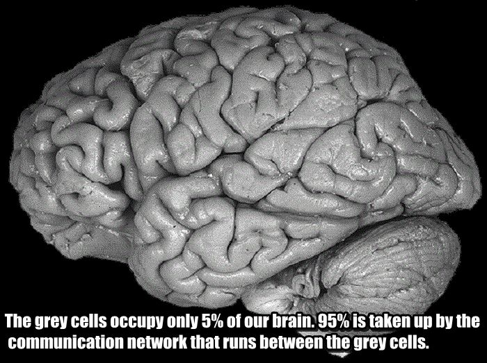 Facts You Didn't Know About Your Brain (25 pics)