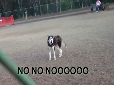 Dog Wants To Stay In Park