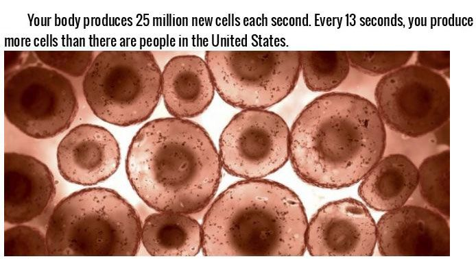 Incredible Facts About The Human Body (22 pics)