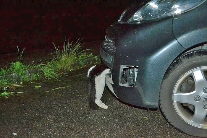 Cat Survives Head On Collision (3 pics)