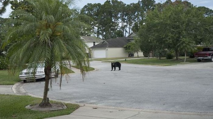 This Bear Does What It Wants (5 pics)