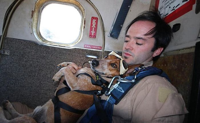 This Dog Loves To Go Skydiving (8 pics)