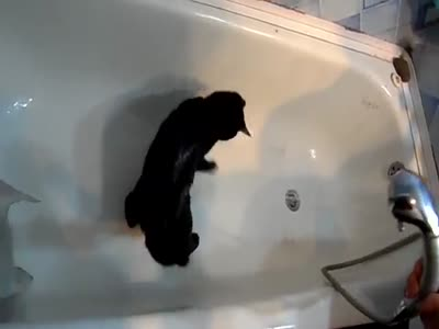Kitten Likes To Take A Shower