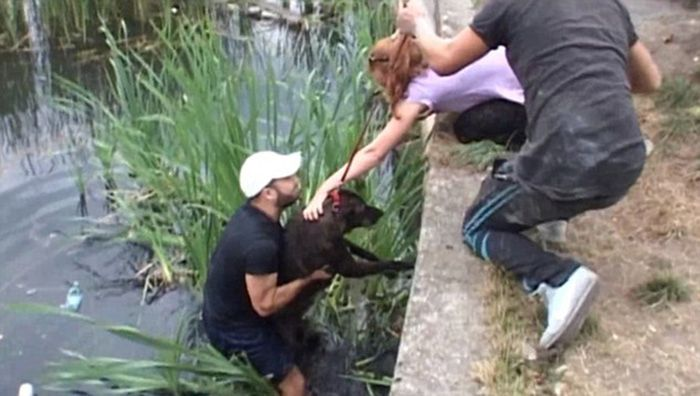 Stray Dogs Rescued From A Lake (7 pics)