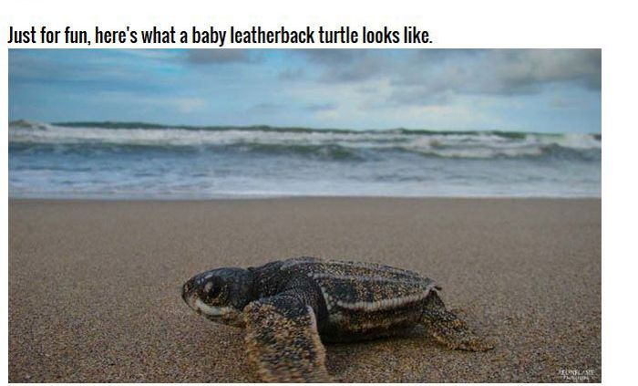 The Inside Of A Turtles Mouth Is Absolutely Terrifying (10 pics)
