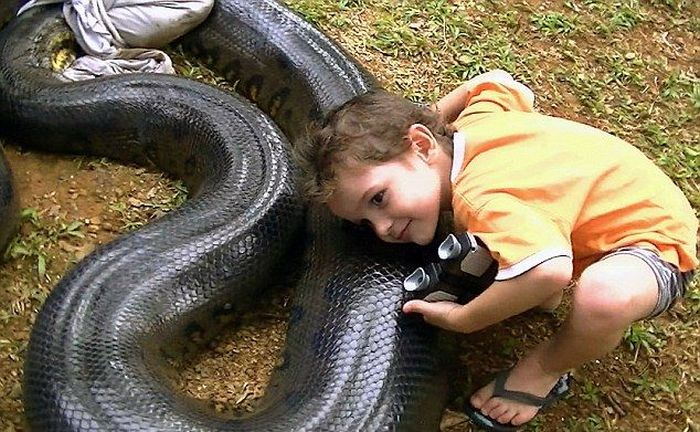 Giant Anaconda Snake (10 pics)