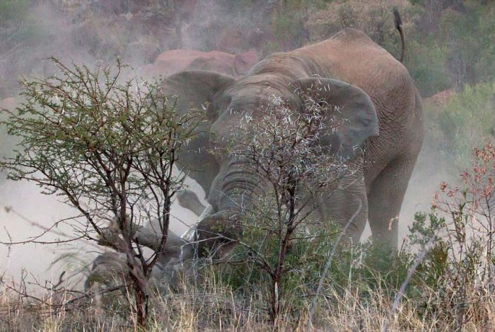 A Rhino And An Elephant Throw Down In The Jungle (11 pics)