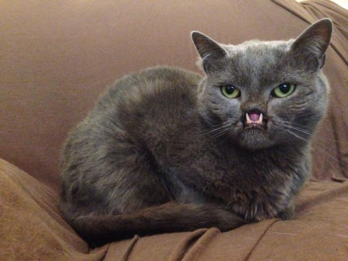 Meet Lazarus The Cat Without A Nose (30 pics)