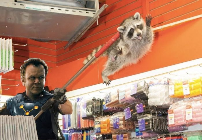 New York City Raccoon Becomes Internet Sensation (20 pics)