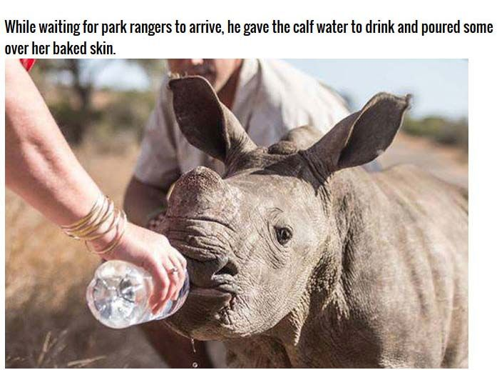 Poachers Leave Rhino Orphaned (4 pics)