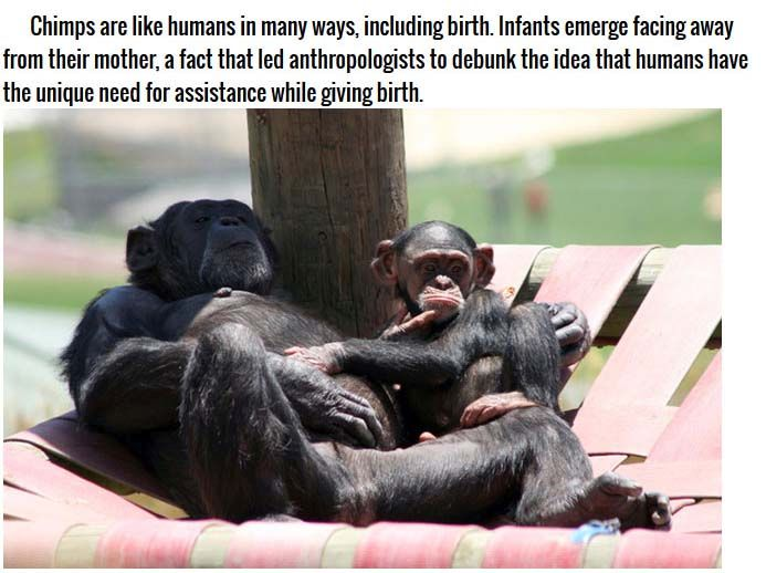 Strange Facts About Animal Pregnancies (10 pics)