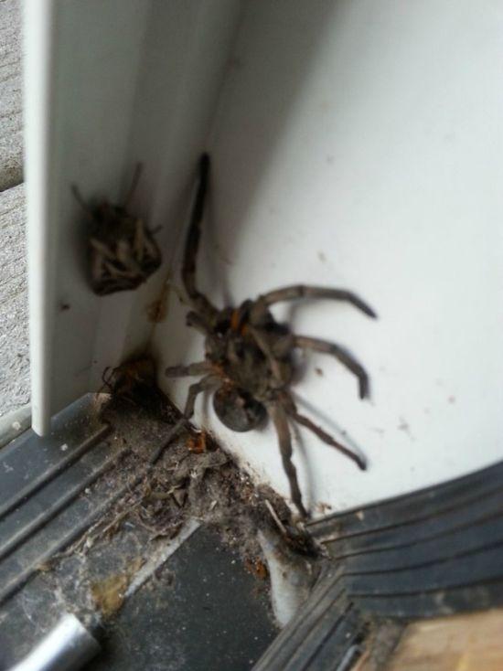 Creepy Surprise At The Door (3 pics)