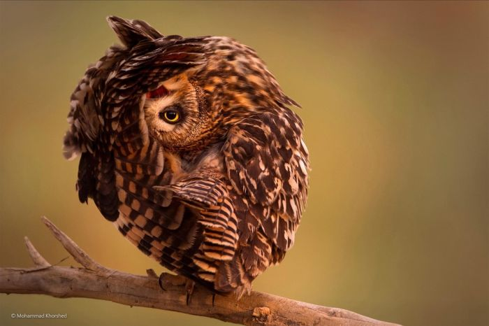 One Of These Will Win 2014 Wildlife Photographer Of The Year (43 pics)