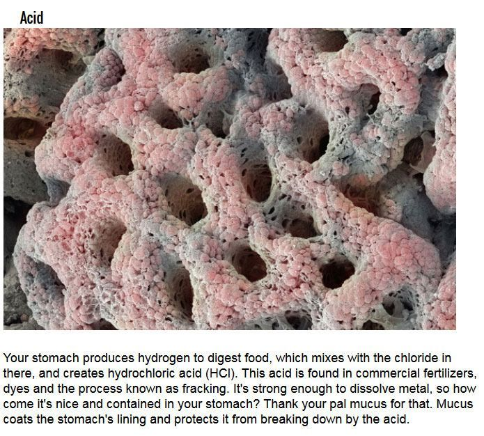 Disgusting Things Your Body Is Doing Right Now (10 pics)
