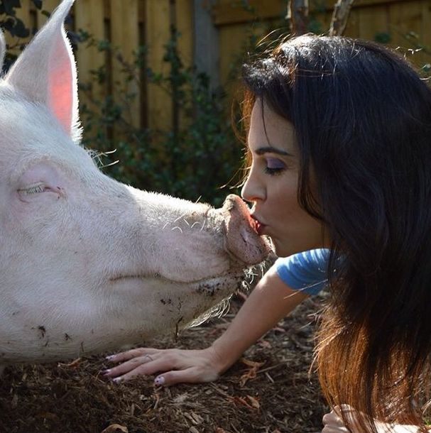 This Is What It's Like To Have A Pig For A Pet (40 pics)