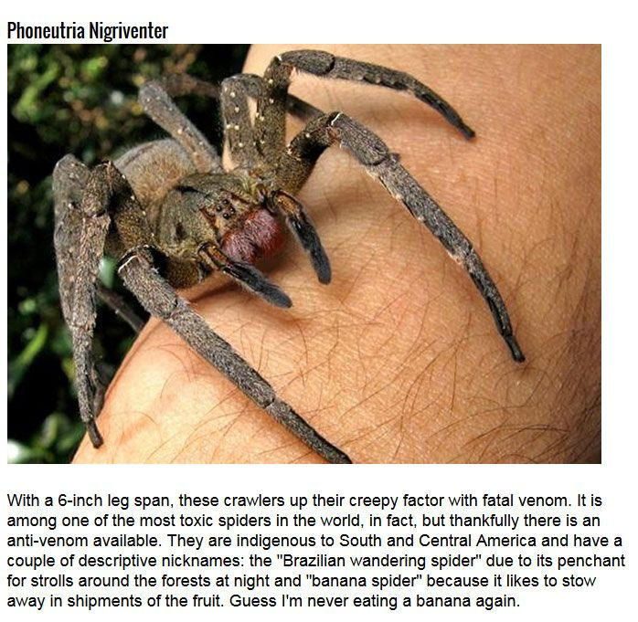 5 Creepy Spiders You Don't Want To Mess With (5 pics)